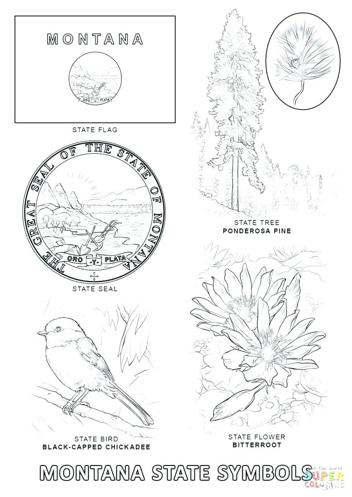 725x1024 Arkansas Coloring Pages State Symbols Coloring Pages State Symbols