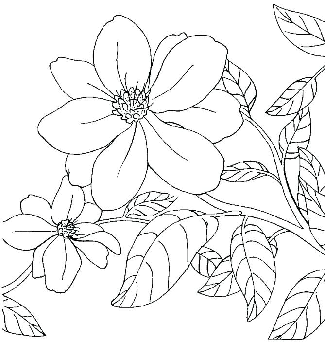 669x703 Arkansas Coloring Pages Best Images On Apples And Razorback Sheets