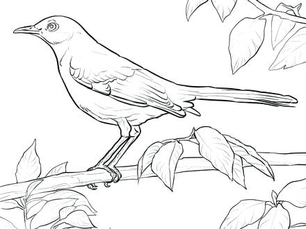 440x330 Arkansas Coloring Pages State Bird Coloring Page Free Printable