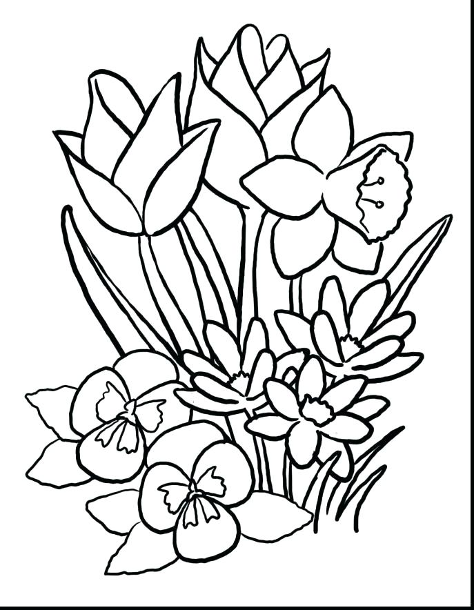 687x884 State Bird And Flower Coloring Pages Arkansas Coloring Pages State