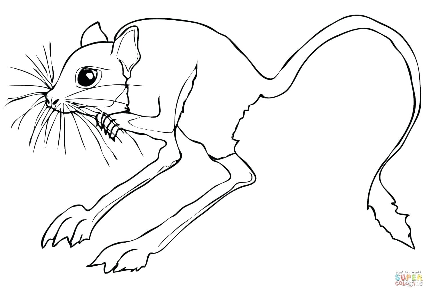 1500x1024 Coloring Pages Flowers For Adults Arrowhead Reptile Rescue Iguana