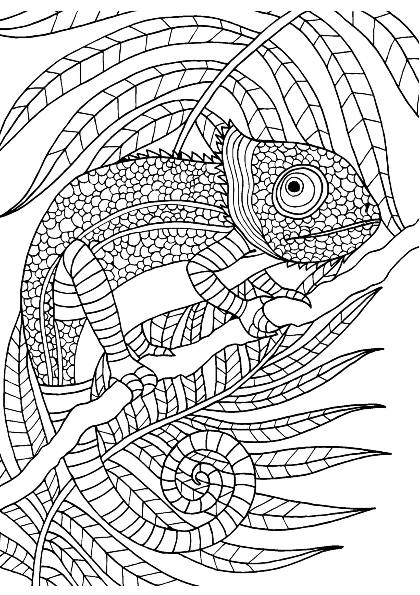1646x2328 Chameleon Adult Colouring Page Colouring In Sheets