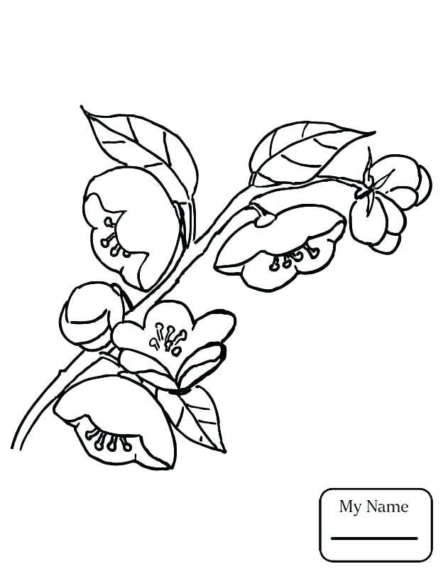 624x808 Apple Tree Coloring Page Oak Tree Coloring Page Tree Leaves
