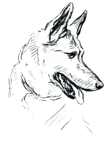 365x480 Australian Shepherd Coloring Pages Pics Of Yoga Coloring Pages