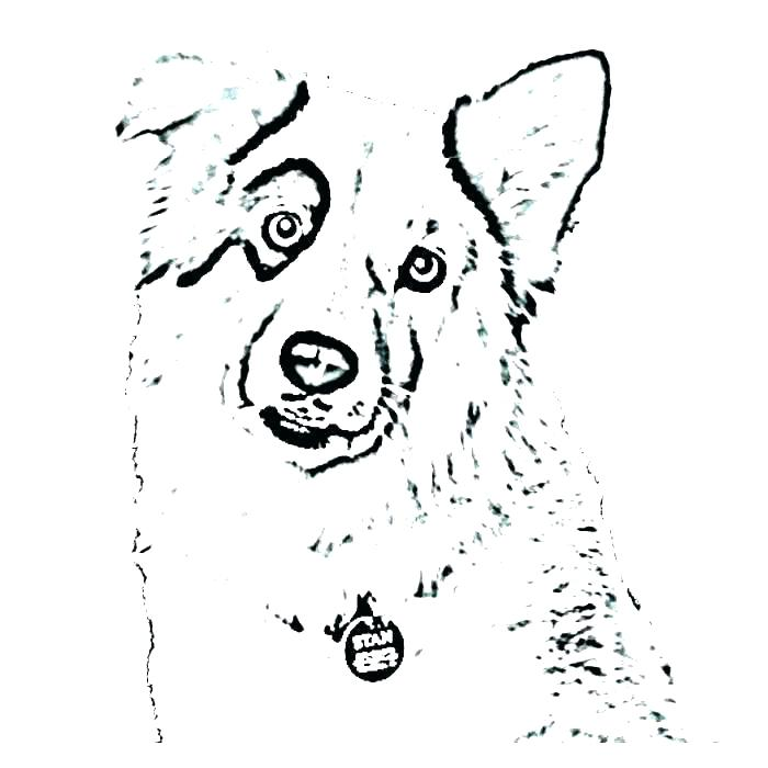 700x700 Australian Shepherd Coloring Pages Shepherd Coloring Page Free