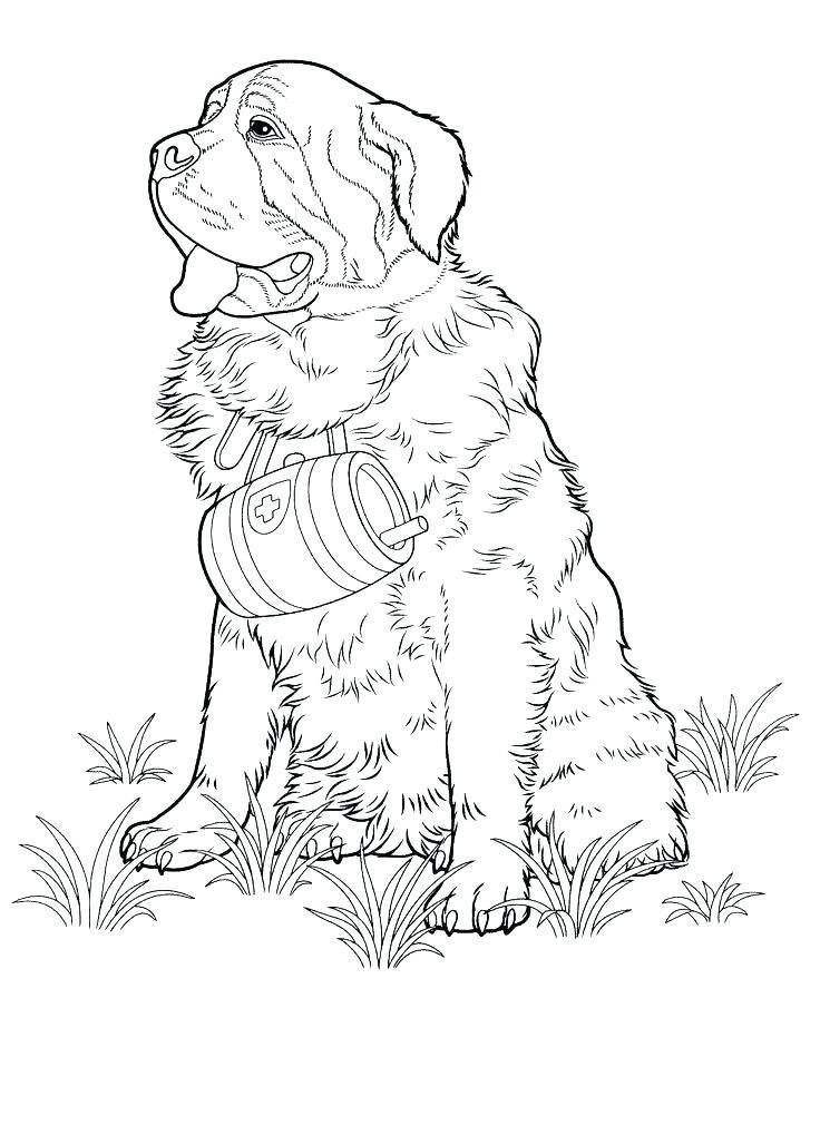 736x1010 Australian Shepherd Coloring Pages Shepherd Coloring Pages Mini