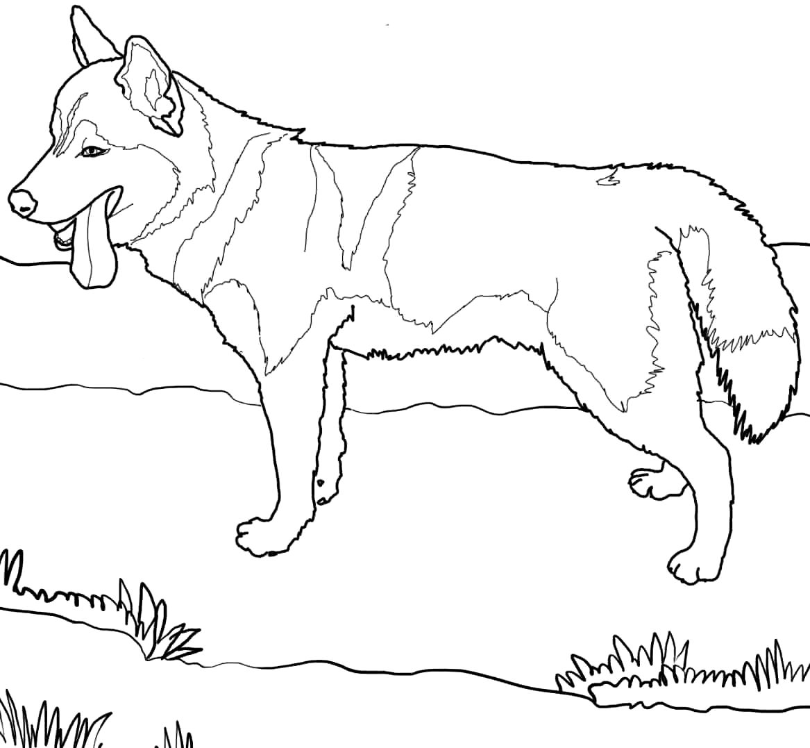 1167x1077 Husky Puppy Coloring Pages Photo