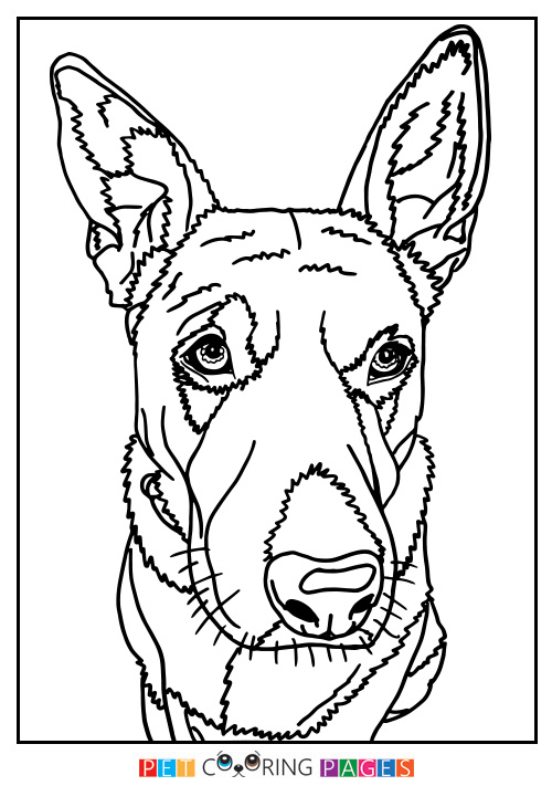 500x711 Australian Cattle Dog Coloring Page Lily