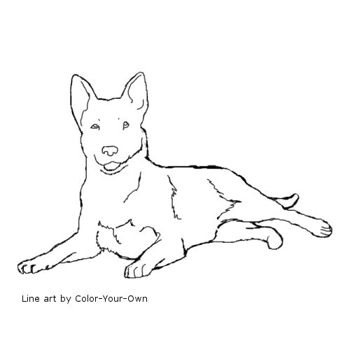 500x500 Australian Cattle Dog Coloring Page