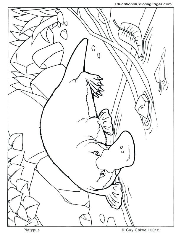 612x792 Australia Coloring Pages Coloring Pages Platypus Coloring Animal