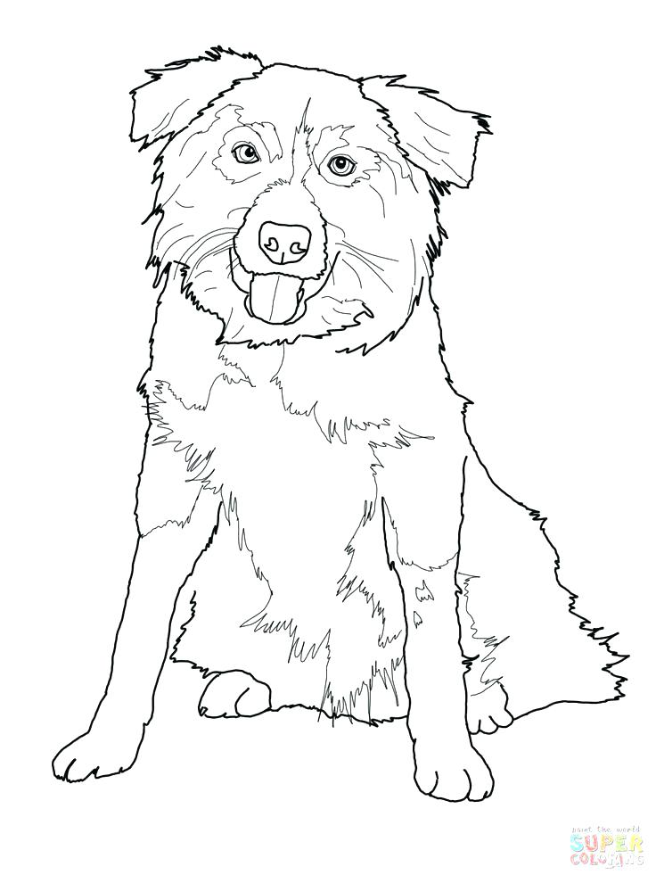 736x981 Australian Shepherd Coloring Pages Australian Shepherd Puppy