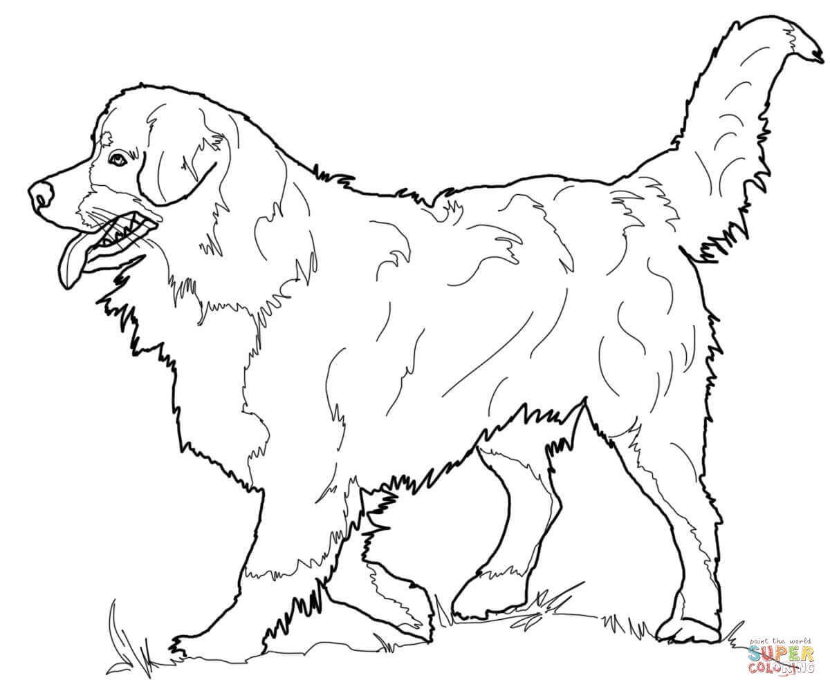 1200x1000 Australian Shepherd Coloring Pages Free Coloring For Kids