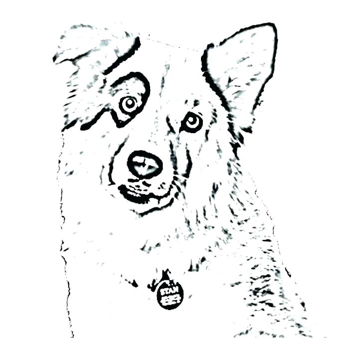 700x700 Shepherd Coloring Pages And Page Shepherd Coloring Toy Australian