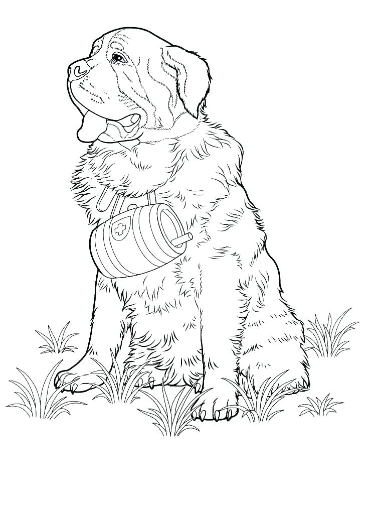 736x1010 Shepherd Coloring Pages Realistic German Shepherd Coloring Pages