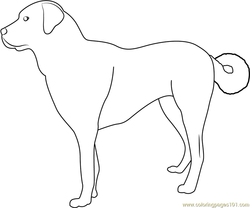 800x665 Australian Cattle Dog Blue Heeler Coloring Pages Sketch Unique