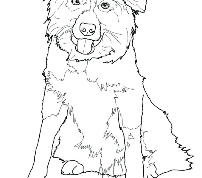 678x600 Australian Shepherd Coloring Pages Click To See Printable Version