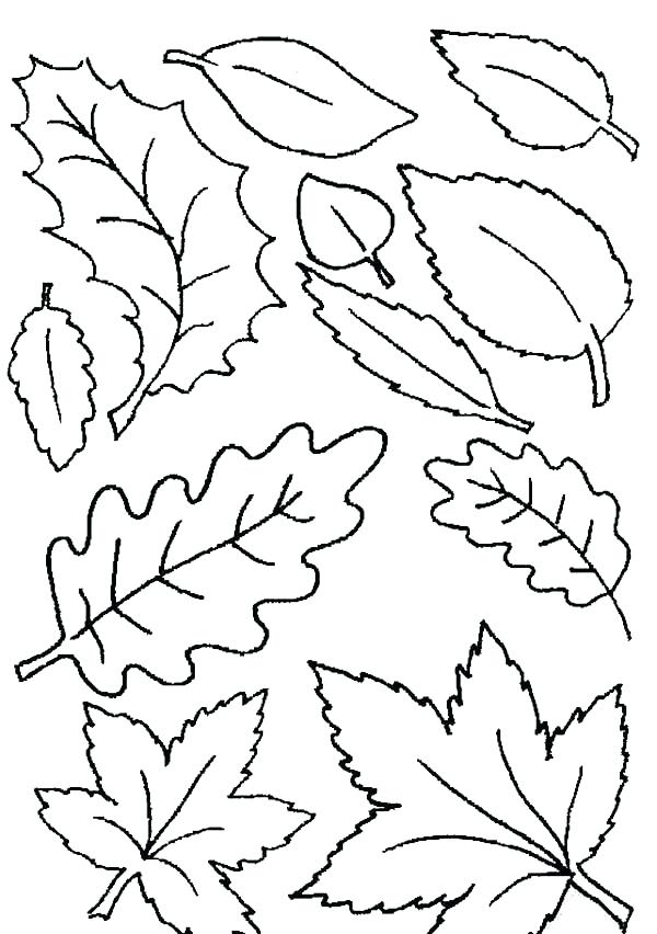 600x852 Autumn Coloring Pages Various Leaves Fall In Autumn Coloring Pages