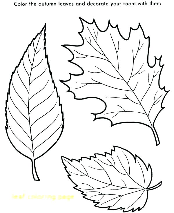 600x734 Coloring Pages Of Fall Leaves Leaf Coloring Pages Autumn Coloring