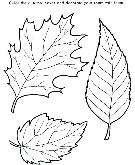 550x672 Big Fall Leaves Coloring Pages Leaf For Preschool Autumn Sheets