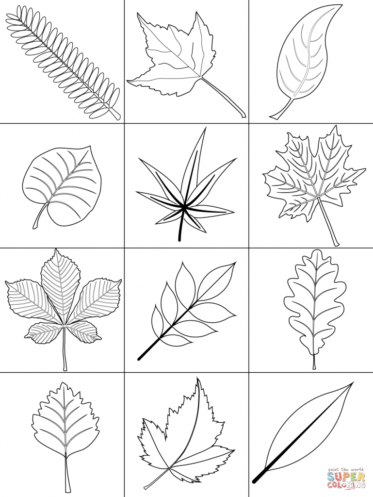 769x1024 Fall Leaf Coloring Pages