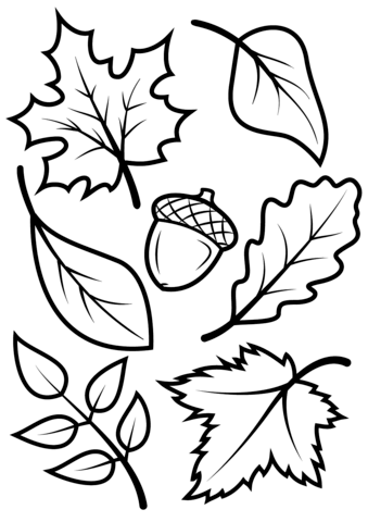 339x480 Fall Leaves And Acorn Coloring Page From Fall Category Select