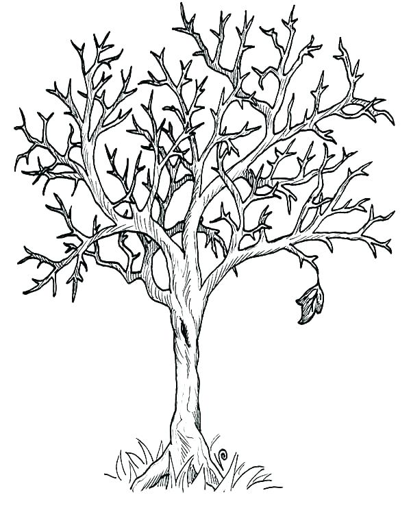 600x741 Fall Tree Coloring Page Bare Tree Coloring Page Bare Tree Coloring