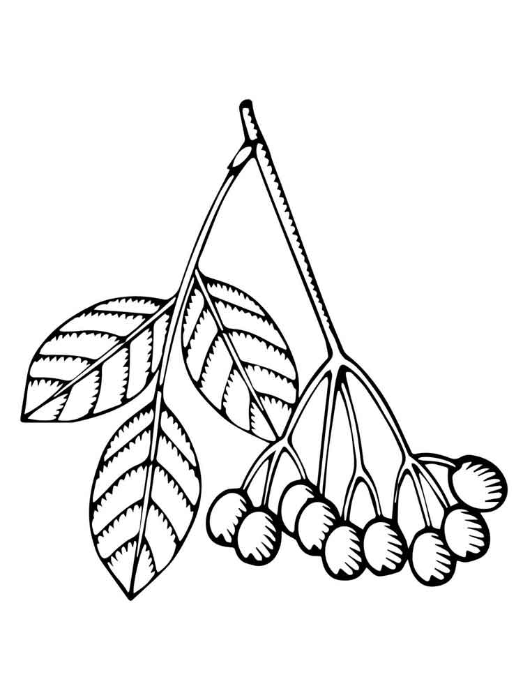 750x1000 Elderberry Coloring Pages Download And Print Elderberry Coloring