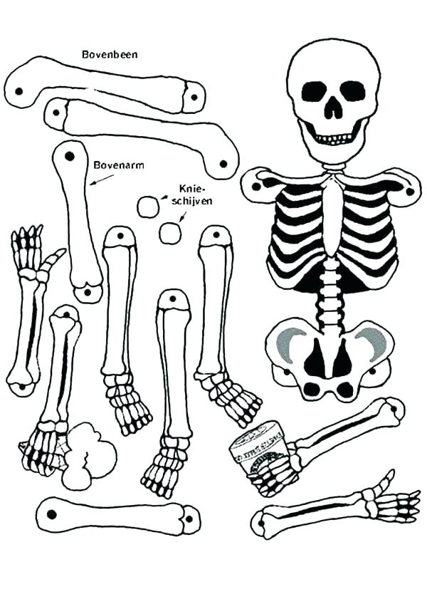 600x848 Axial Skeleton Coloring Page Skeleton Coloring Pages