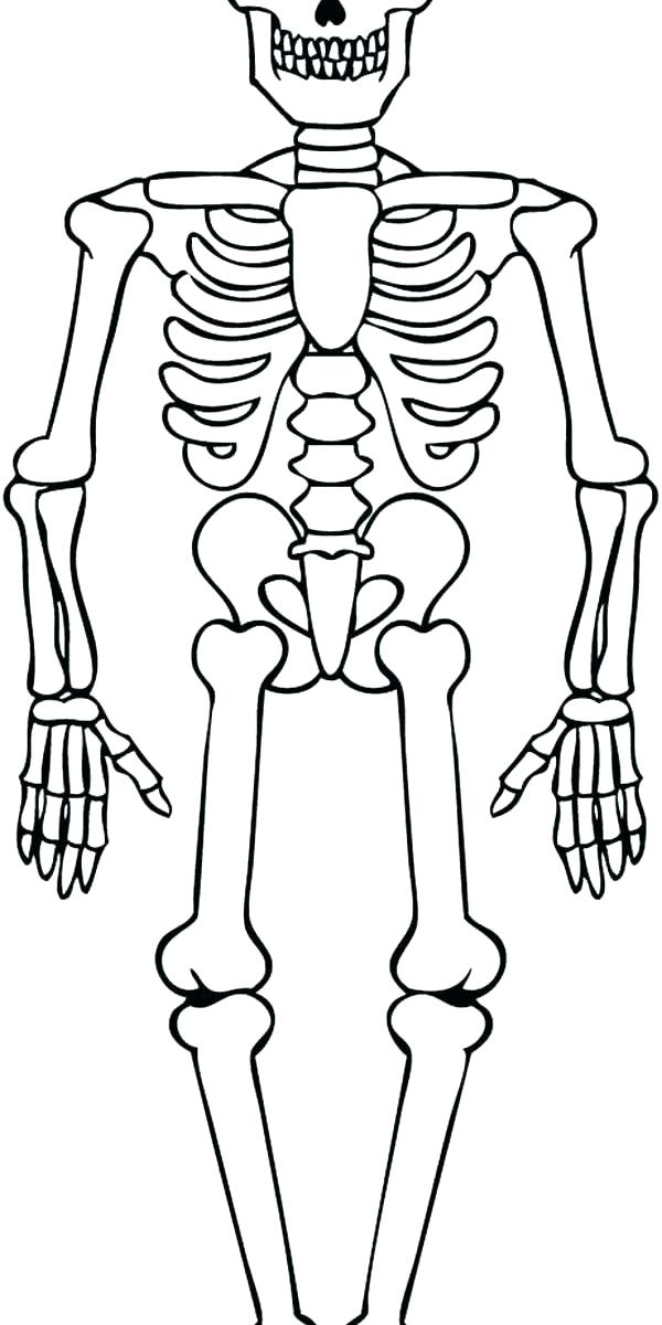 600x1200 Axial Skeleton Coloring Page Skeleton Coloring Sheet Contemporary