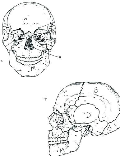 386x500 Skeleton Coloring Pages Printable Vanda