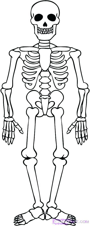 462x1163 Skeleton Coloring Sheet