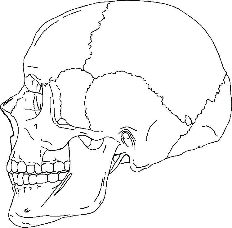 748x733 Axial Skeleton Coloring Sheet Axial Skeleton Coloring Page Photo