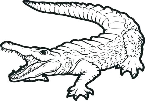 Baby Alligator Coloring Pages at GetDrawings | Free download