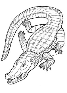 236x324 Free Printable Alligator Coloring Pages For Kids Printable