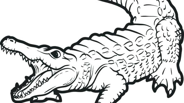 585x329 Alligator Coloring Page Coloring Alligator Free Printable