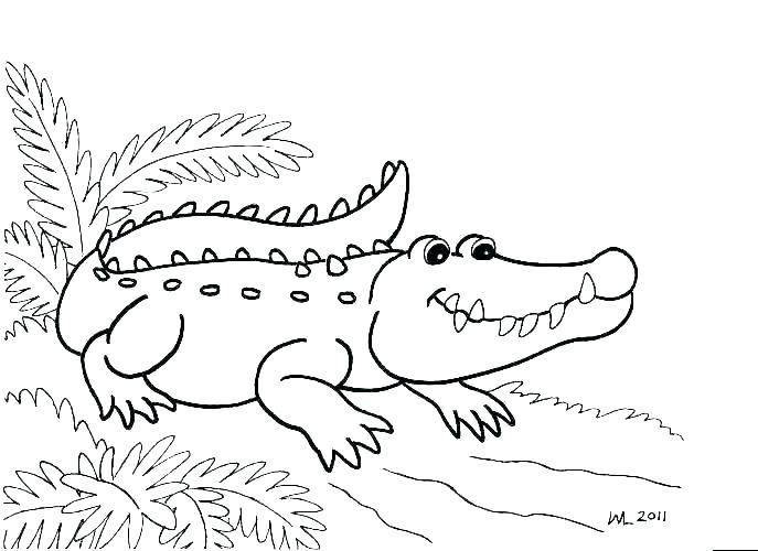 687x500 Alligator Coloring Page Cute Baby Alligator Coloring Pages