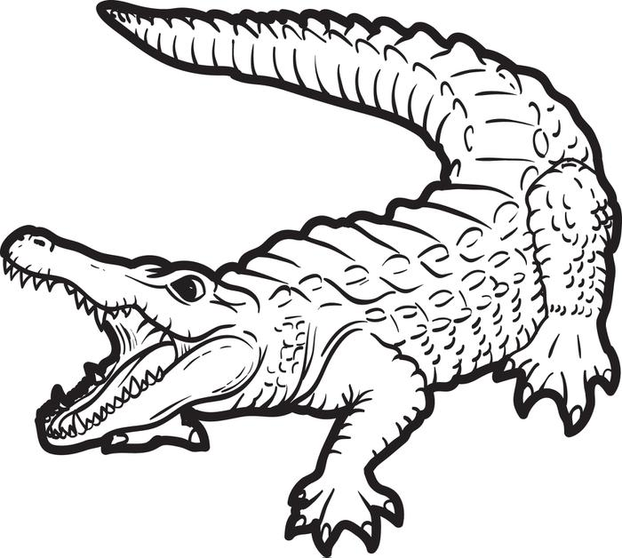 700x628 Alligator Coloring Pages