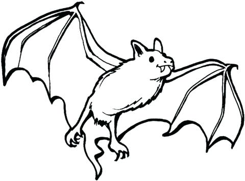480x355 Bat Coloring Pages Vampire Bat Coloring Page Cute Baby Bat