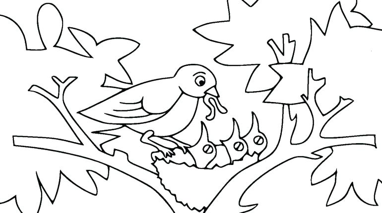 770x430 Bird Nest Coloring Page Bird Nest Coloring Page Baby Bird Coloring