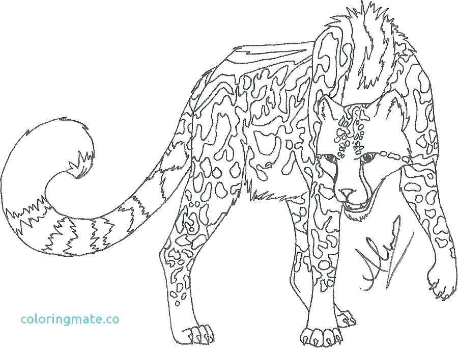 900x683 Cheetah Coloring Pages Cheetah Coloring Pages Cheetah Coloring