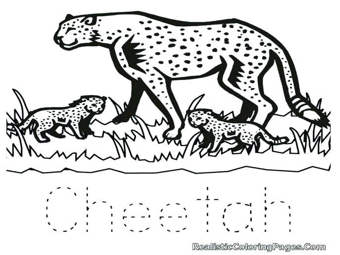 687x515 Baby Cheetah Coloring Pages Cheetah Coloring Page Amusing Cheetah