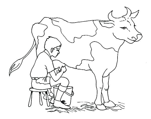 600x475 Cow Color Page Cow Coloring Pages Cow Color Pages Baby Cow