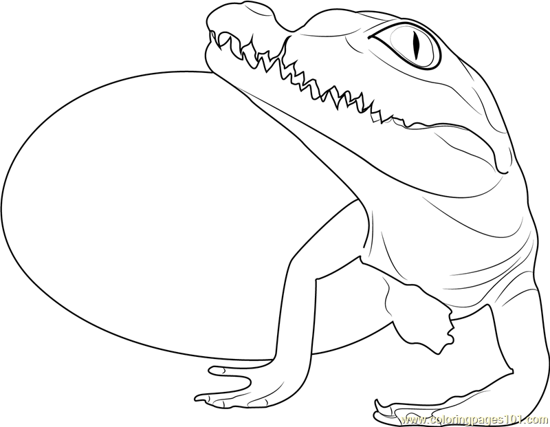 800x621 Baby Crocodile Hatchling Coloring Page