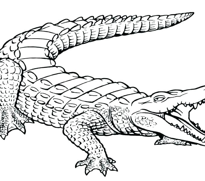 678x600 Crocodile Coloring Page Crocodile Coloring Pages For Kids Baby