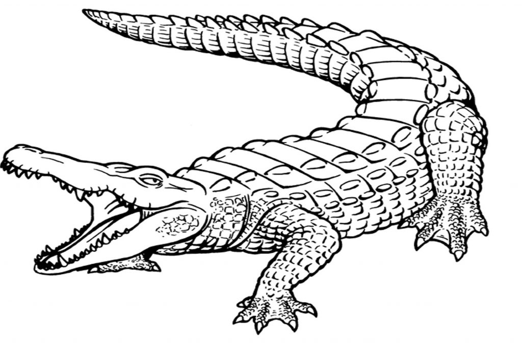 1024x673 Crocodile Coloring Pages Free Picture High Definition Hunter