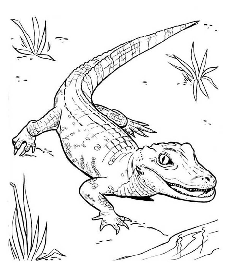 Baby Crocodile Coloring Pages at GetDrawings.com | Free for personal ...