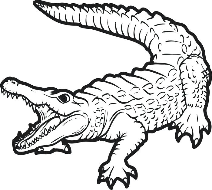 700x628 Baby Crocodile Coloring Page Free Printable Coloring Pages Cute