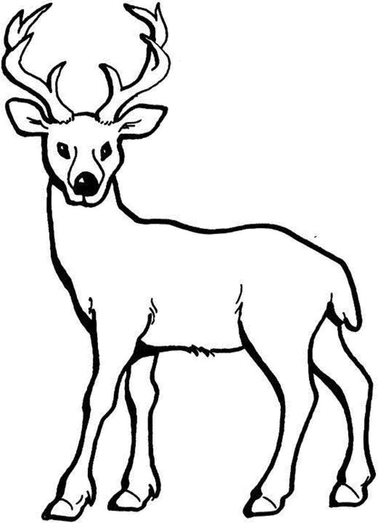 736x1017 Best Deer Coloring Pages Images On Deer Coloring