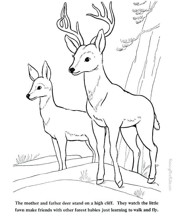 670x820 Baby Deer Coloring Pages Deer Coloring Pages Free Red Deer