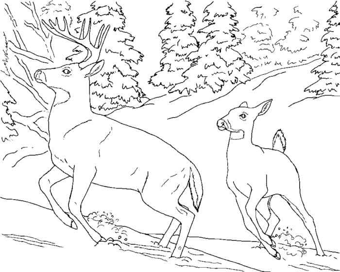 700x560 Coloring Pages Deer Baby Deer Coloring Pages Deer Coloring Pages